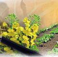Preparaty biologiczne do likwidacji zynieczyszczeń
