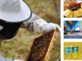 Produkty pszczele i sprzęt pszczelarski z Polski