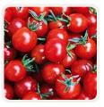 Nasiona pomidora