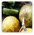 Nasiona owoców tropikalnych