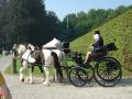 Bryczki na parę koni