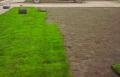 Trawniki rolkowe.