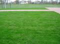 Trawy do trawników.