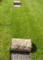 Trawnik ogrodowo-parkowy.
