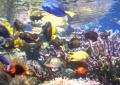 Ryby akwariowe morskie
