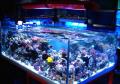 Ryby akwariowe tropikalne