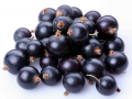 Owoce schłodzone