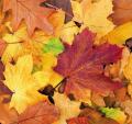 Serwetki z motywem jesiennym