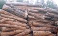 Drewno n rozpałkę sosnowe