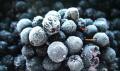Mrożone owoce aronii
