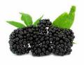 Mrożone owoce bzu