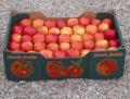 Jabłko, jabłka różne odmiany