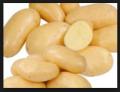 Wczesny ziemniak