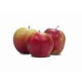 Jabłka odmiany Ligol