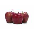 Jabłka Gloster