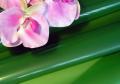 Folia lakierowana matowa do pakowania kwiatów