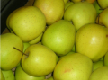 Jabłka Golden