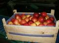 Jabłka Idared w skrzyni drewnianej