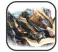 Podgrzybek brunatny suszony