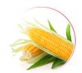 Nasiona zbóż ozimych, jarych, nasiona rzepaku, kukurydzy, traw