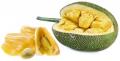 Chlebowiec różnolistny, drzewo bochenkowe (owoc)
