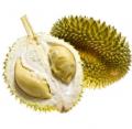 Durian właściwy