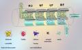 Systemy filtracji membranowej dla mleczarstwa