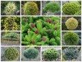 Rośliny pienne
