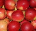 Jabłko w odmianie Idared na eksport i sprzedaż w kraju.