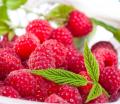 Suszone owoce malin do sporządzania naparów na wzmocnienie organizmu.