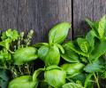 Wyjątkowe, niespotykane i niecodzienne przyprawy i zioła.