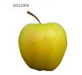 Świeże jabłka z polskich sadów odmiany golden, odmiana deserowa o ścisłym, średnio soczystym miąższu, smak jabłka winno słodki.