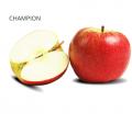 Wczesnozimowa odmiana Champion to jabłka słodko winne, bardzo smaczne i soczyste , jabłka pochodzą z polskich sadów.