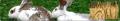 Mieszanki Paszowe Pełnoporcjowe dla królików