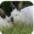 Pasze dla królików
