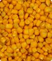 Kukurydza zamrożona ziarno