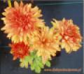 Chryzantema Pomarańczowa
