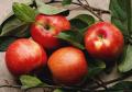 Jabłka, kalibrowane, różne odmiany. Kraj pochodzenia: Turcja