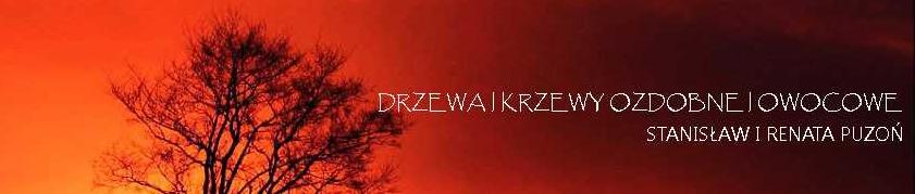 Szkółka Drzew i Krzewów, Os. fiz., Ustroń
