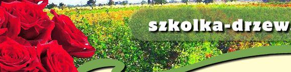 Kwalifikowana Szkółka Drzew Owocowych i Krzewów Róż Z.K.M. Piechoccy, Z.P., Kostrzyn