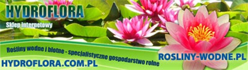 Hydroflora rośliny wodne, Z.P., Choroszcz