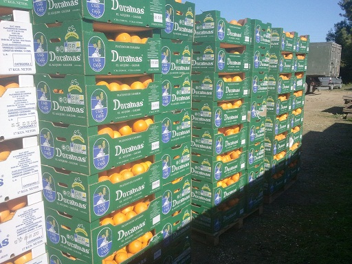 Zamówienie Sprzedam pomarancze hiszpanskie ,papryke i oleje spozywcze