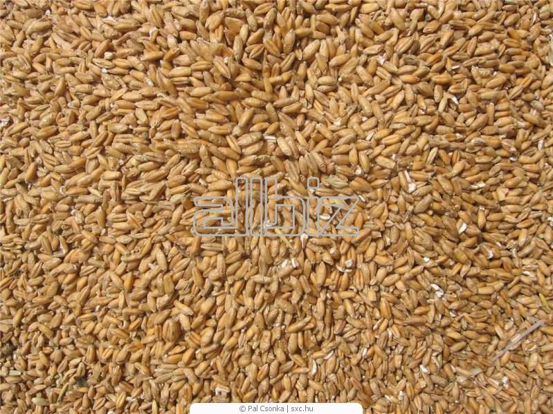 Zamówienie Przemiał pszenicy
