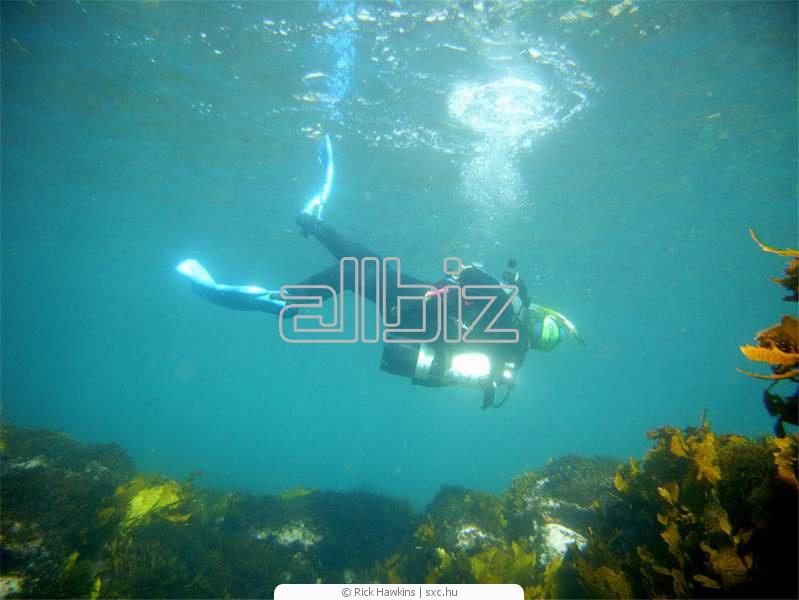 Zamówienie Nurkowanie głębinowe