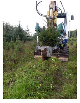 Zamówienie Kopanie drzew