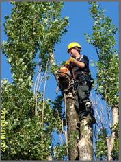 Zamówienie Ekspertyzy dendrologiczne ze wskazaniem zabiegów pielegnacyjno-ochronnych przy drzewach oglowionych