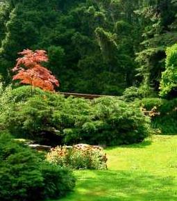 Zamówienie Usługi ogrodnicze