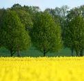 Zamówienie Skup biomasy
