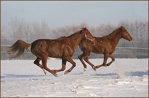Zamówienie Pensjonat dla koni