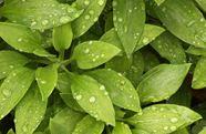 Zamówienie Pielęgnacja ogrodów przydomowych , zieleni publicznej (wraz z doborem roślinności)
